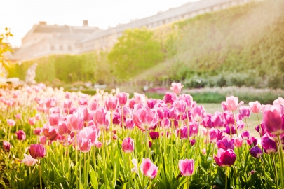 Jardins du Palais-Royal au printemps, Paris