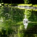 le Cygne, Chantilly